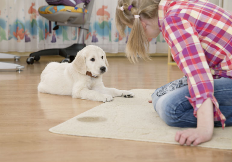 dog urine carpet cleaner