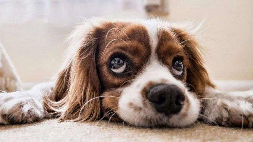 Pet Dog Urine On Carpet Four Best Products For Removal